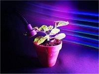Plantas controladas com luz prometem dispensar agrotóxicos